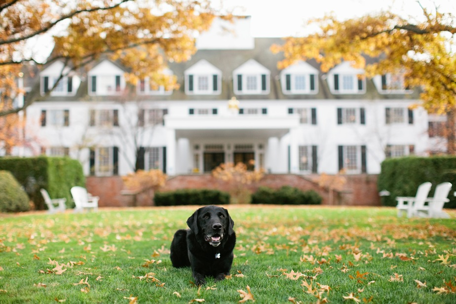 Pet Friendly Woodstock Inn